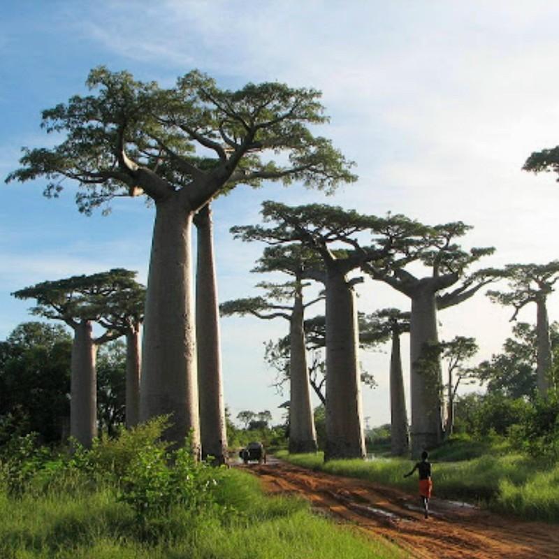 Madagascar - Wikipedia