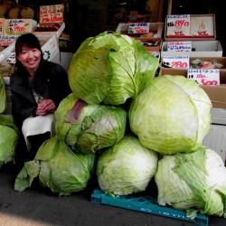 Japon Dev Lahana tohumları
