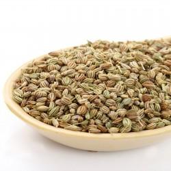 Ajowan Ajwain 50+ seeds Heirloom! Trachyspermum ammi