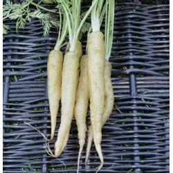 Carrot Seeds LUNAR WHITE