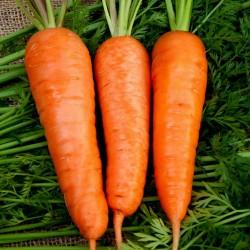 Carrot Flakkee Seeds 2.049999 - 1